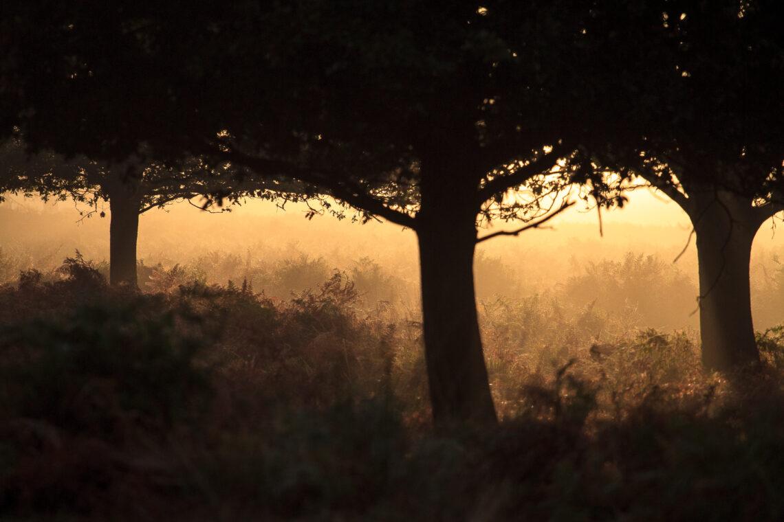 Deer in the mist at Richmond Park
